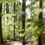 Fürst Wallerstein Waldschutz