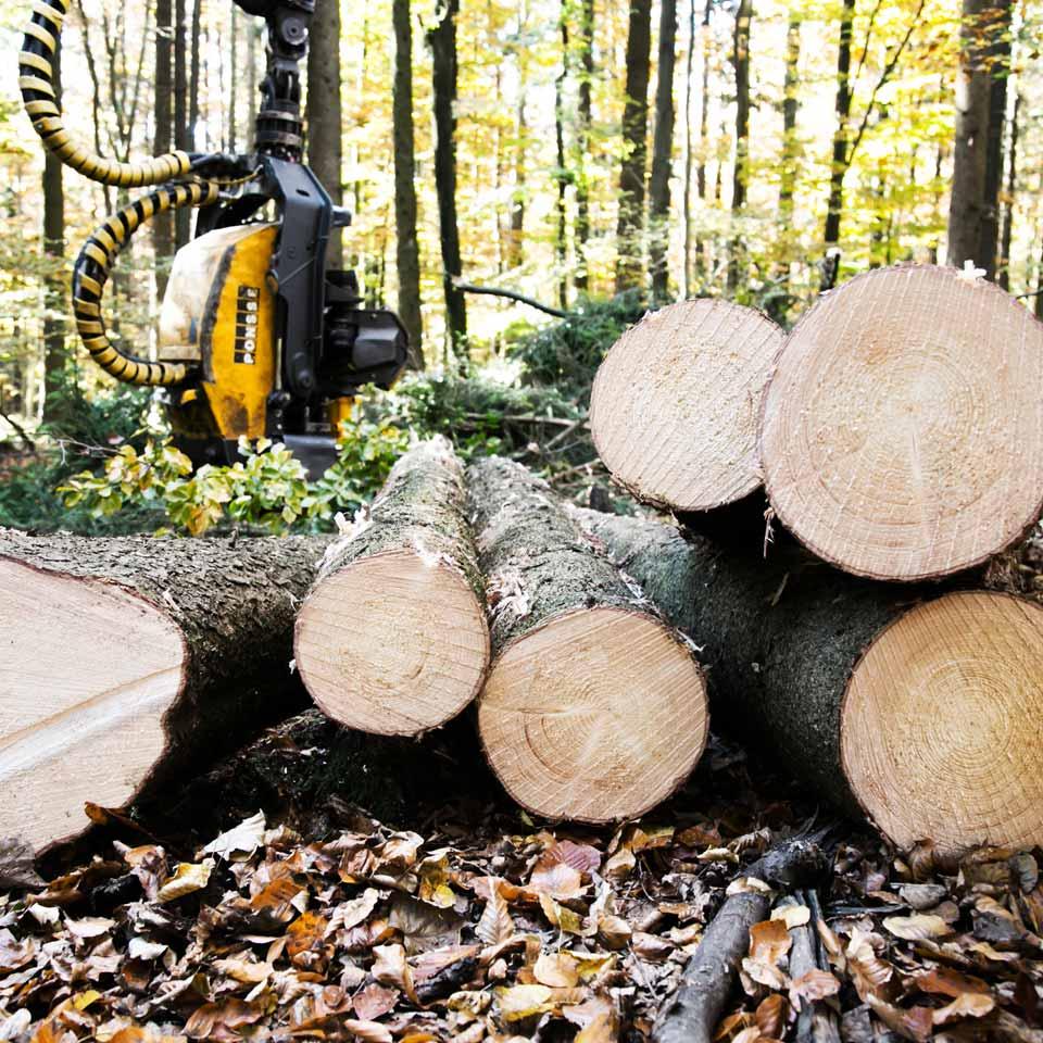 Fürst Wallerstein Waldwirtschaft Von Der Waldarbeit Bis Zum